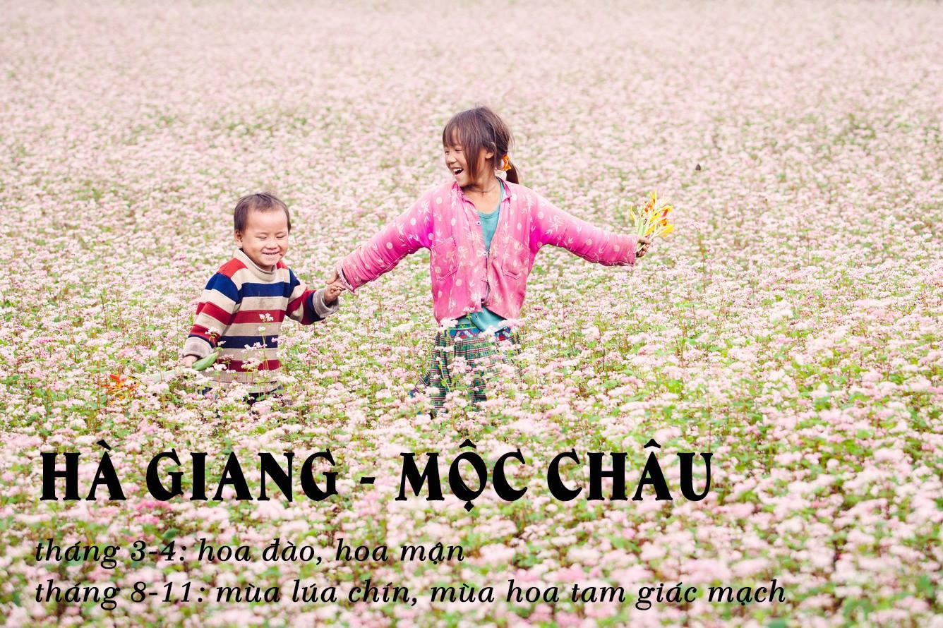 Du Lịch Mộc Châu: Hà Nội - Mộc Châu 2 Ngày Đón Tết Độc Lập Đồng Bào Dân Tộc Mông 2N1Đ