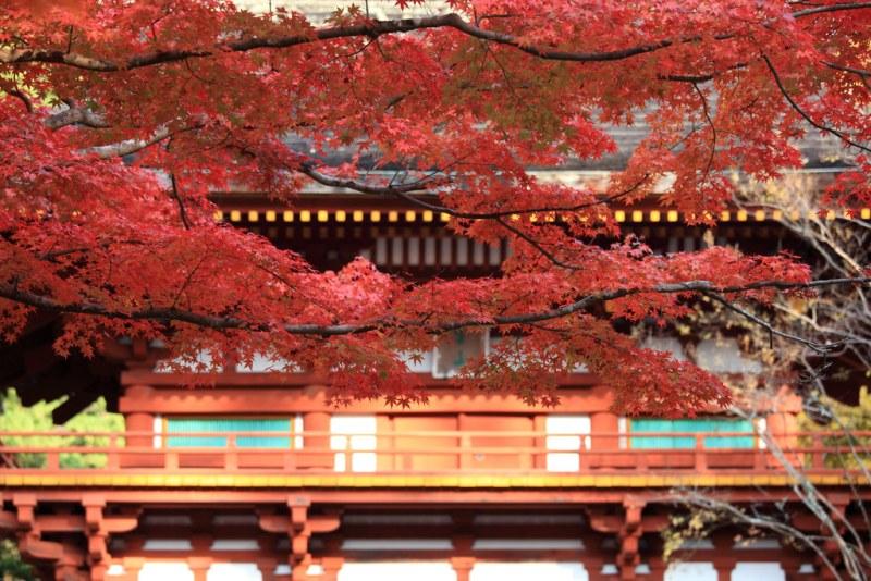 Khám phá những thành phố đẹp nhất ở Nhật Bản OSAKA- NARA- KYOTO - KOBE